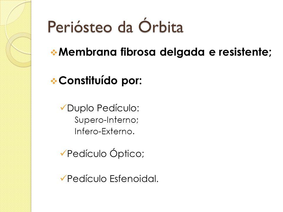 Periósteo da Órbita  Membrana fibrosa delgada e resistente;  Constituído por:  Duplo Pedículo:  Supero-Interno;  Infero-Externo.  Pedículo Óptic