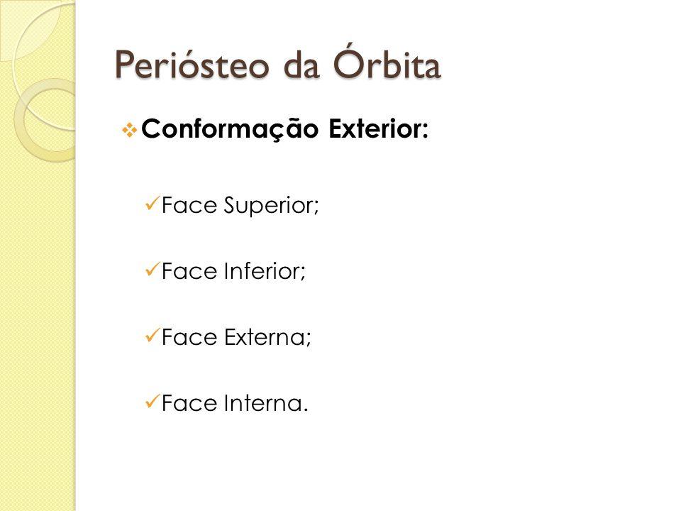 Periósteo da Órbita  Conformação Exterior:  Face Superior;  Face Inferior;  Face Externa;  Face Interna.