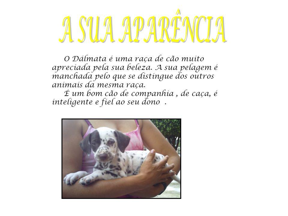 O Dálmata é uma raça de cão muito apreciada pela sua beleza.