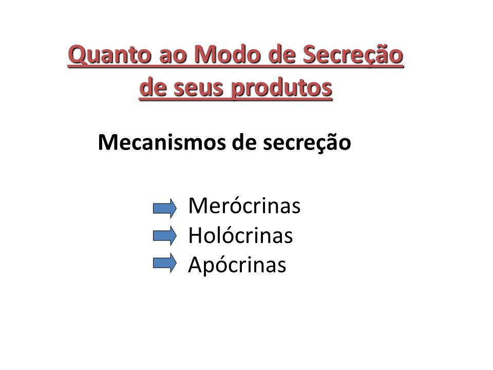 Quanto ao Modo de Secreção de seus produtos Mecanismos de secreção Merócrinas Holócrinas Apócrinas