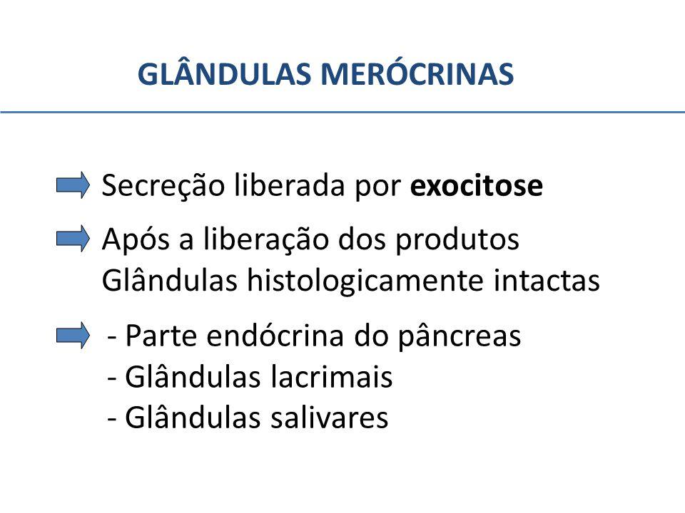 GLÂNDULAS MERÓCRINAS Secreção liberada por exocitose Após a liberação dos produtos Glândulas histologicamente intactas - Parte endócrina do pâncreas -