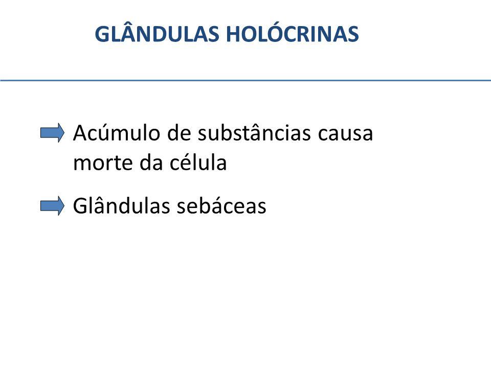 GLÂNDULAS HOLÓCRINAS Acúmulo de substâncias causa morte da célula Glândulas sebáceas