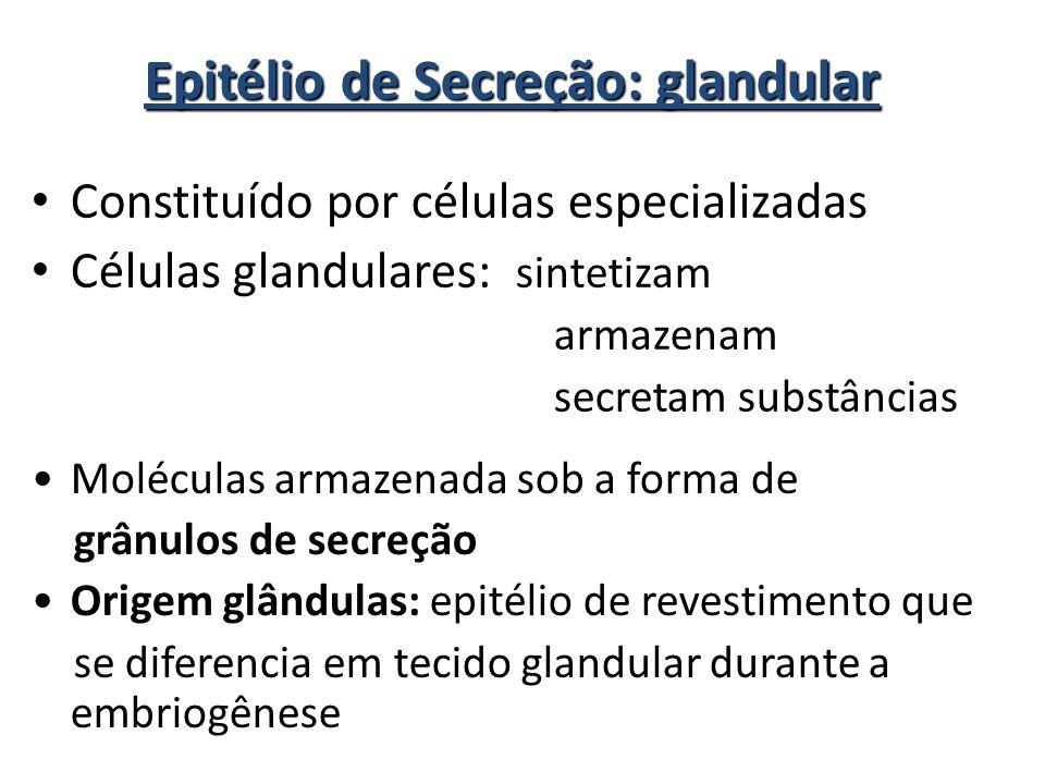 Epitélio de Secreção: glandular • Constituído por células especializadas • Células glandulares: sintetizam armazenam secretam substâncias •Moléculas a