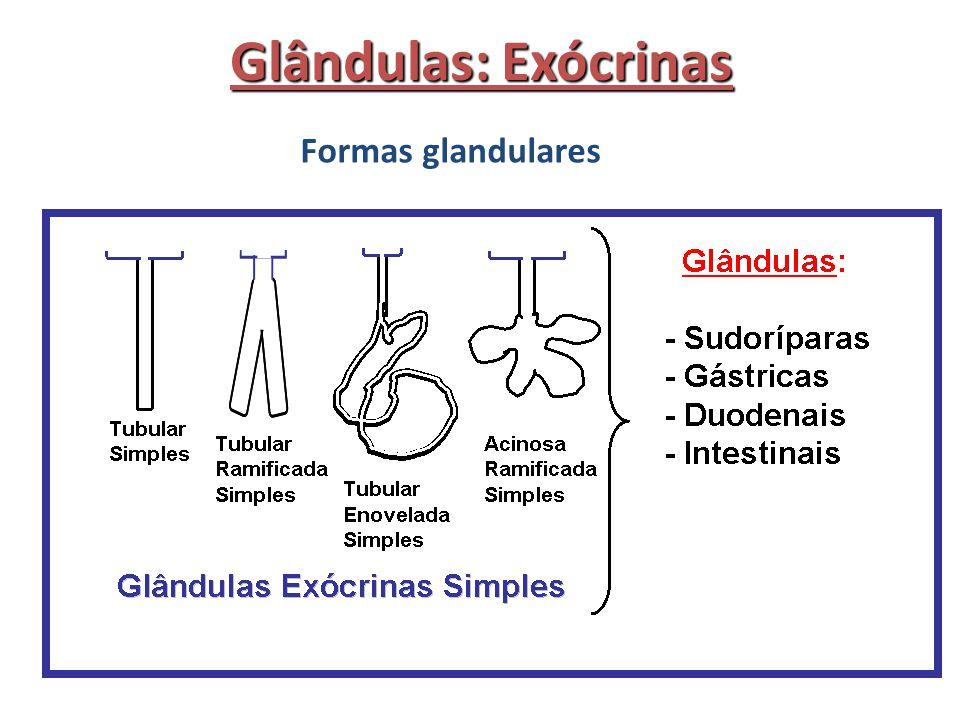 Glândulas: Exócrinas Formas glandulares