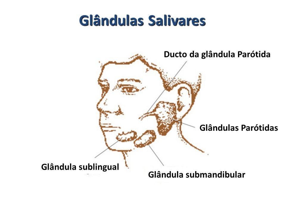 Glândulas Salivares Glândulas Parótidas Ducto da glândula Parótida Glândula submandibular Glândula sublingual