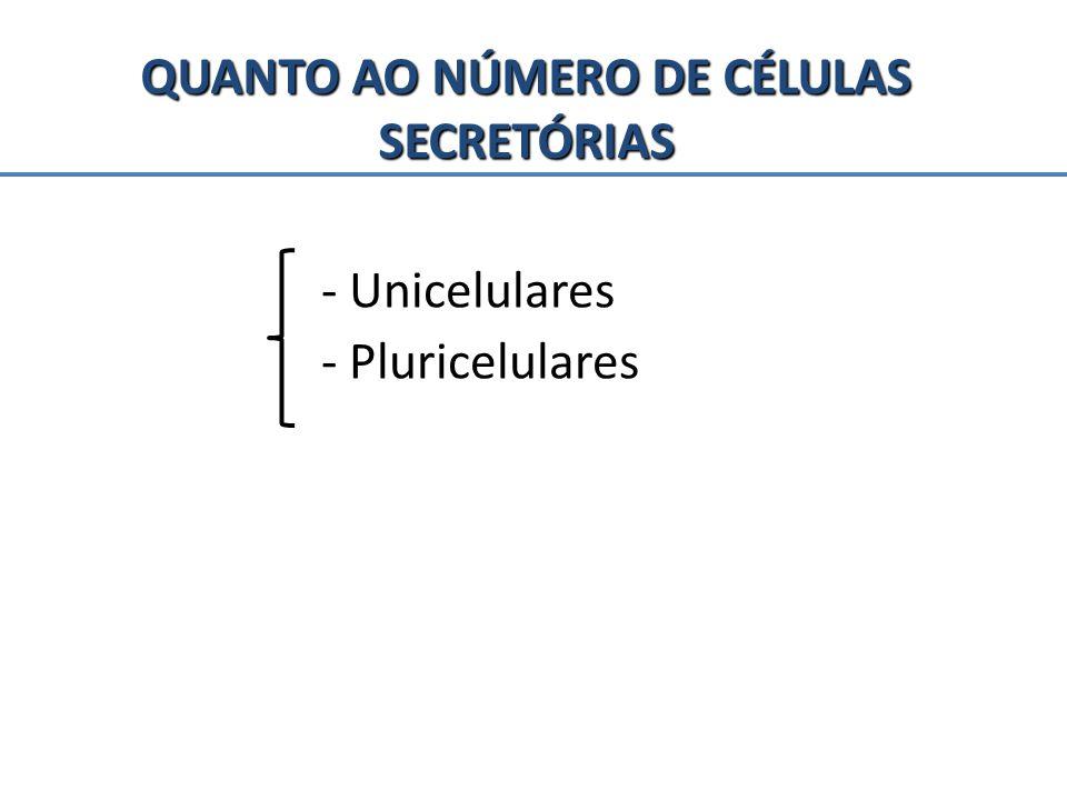 QUANTO AO NÚMERO DE CÉLULAS SECRETÓRIAS - Unicelulares - Pluricelulares
