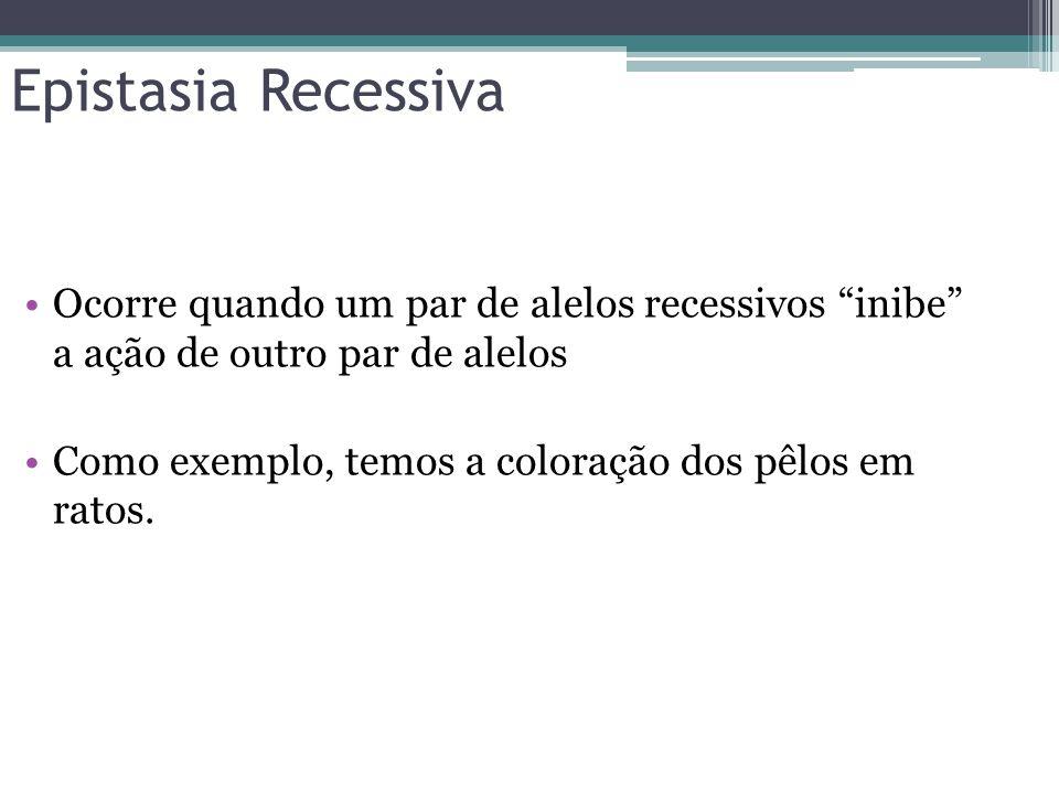 """Epistasia Recessiva •Ocorre quando um par de alelos recessivos """"inibe"""" a ação de outro par de alelos •Como exemplo, temos a coloração dos pêlos em rat"""