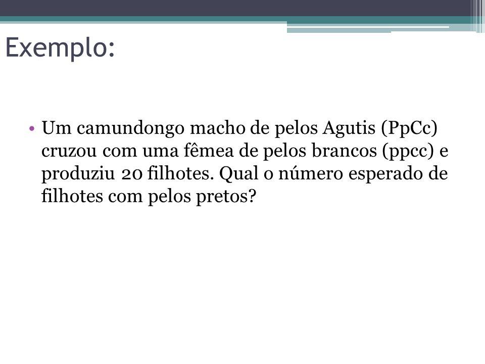 Exemplo: •Um camundongo macho de pelos Agutis (PpCc) cruzou com uma fêmea de pelos brancos (ppcc) e produziu 20 filhotes. Qual o número esperado de fi