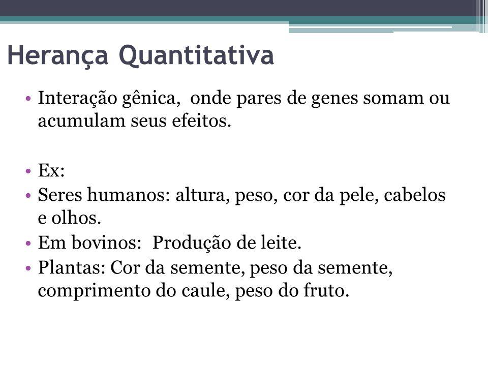 Herança Quantitativa •Interação gênica, onde pares de genes somam ou acumulam seus efeitos. •Ex: •Seres humanos: altura, peso, cor da pele, cabelos e