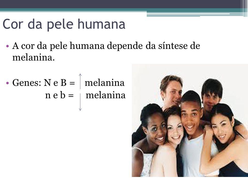 Cor da pele humana •A cor da pele humana depende da síntese de melanina. •Genes: N e B = melanina n e b = melanina