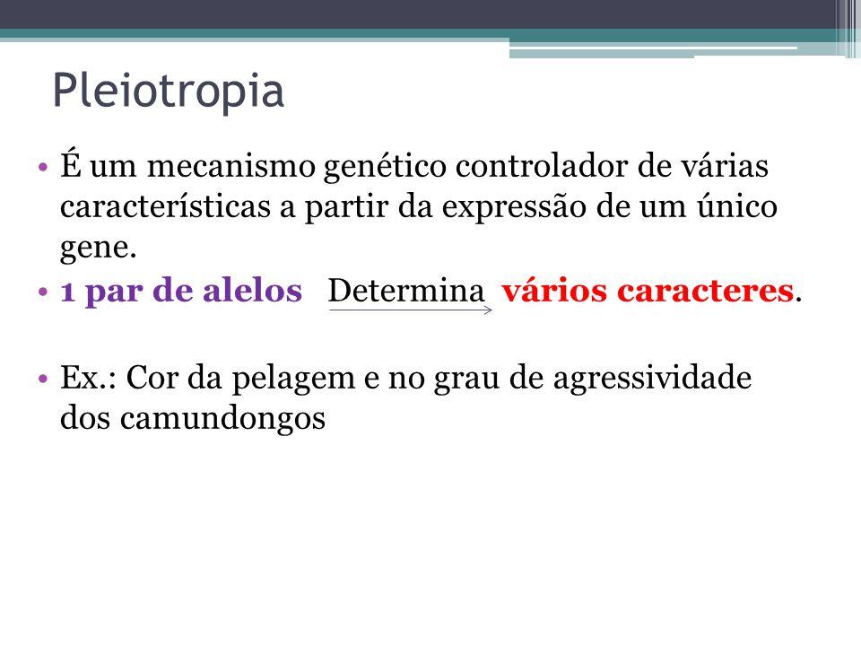 Pleiotropia •É um mecanismo genético controlador de várias características a partir da expressão de um único gene. •1 par de alelos Determina vários c