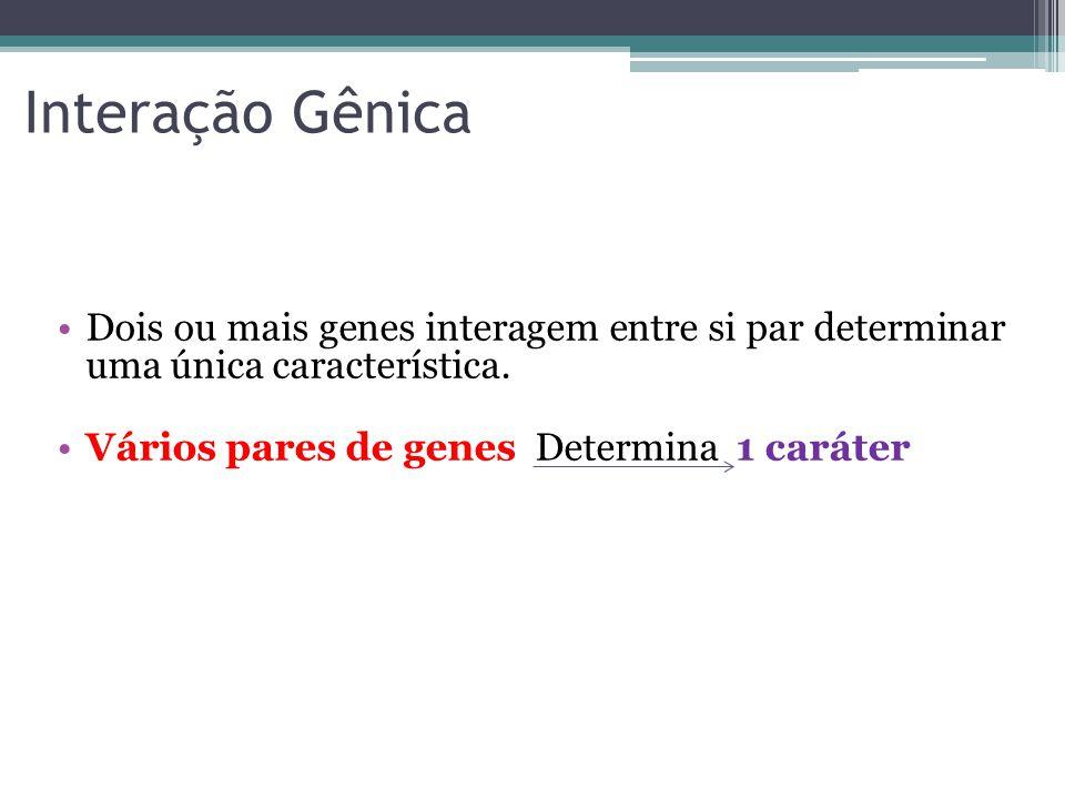 Interação Gênica •Dois ou mais genes interagem entre si par determinar uma única característica. •Vários pares de genes Determina 1 caráter