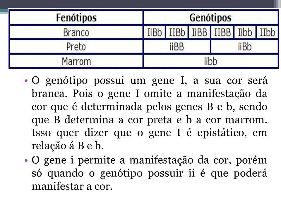 •O genótipo possui um gene I, a sua cor será branca. Pois o gene I omite a manifestação da cor que é determinada pelos genes B e b, sendo que B determ