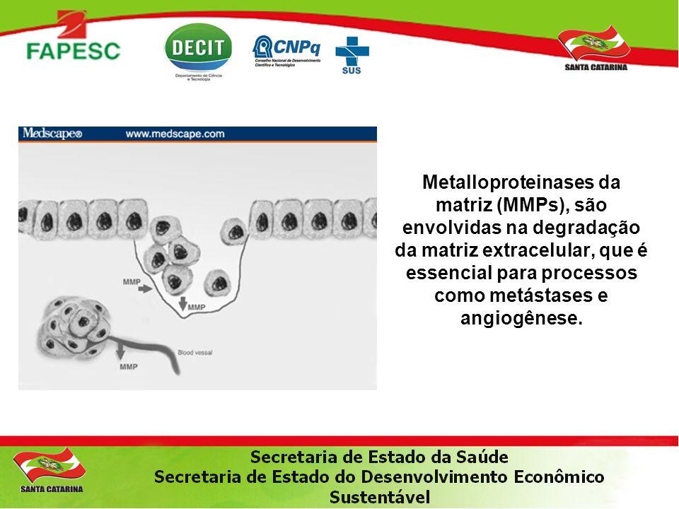 Metalloproteinases da matriz (MMPs), são envolvidas na degradação da matriz extracelular, que é essencial para processos como metástases e angiogênese