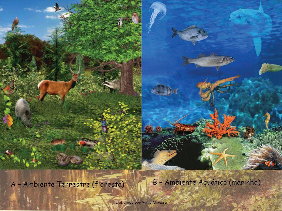 Elaborado por Vânia Oliveira A – Ambiente Terrestre (floresta) B – Ambiente Aquático (marinho)