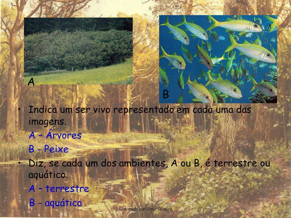 Elaborado por Vânia Oliveira A •Indica um ser vivo representado em cada uma das imagens. A – Árvores B - Peixe •Diz, se cada um dos ambientes, A ou B,