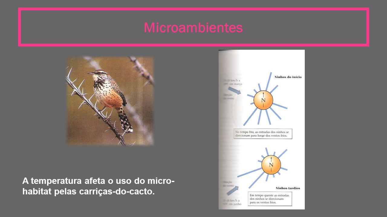 Microambientes A temperatura afeta o uso do micro- habitat pelas carriças-do-cacto.