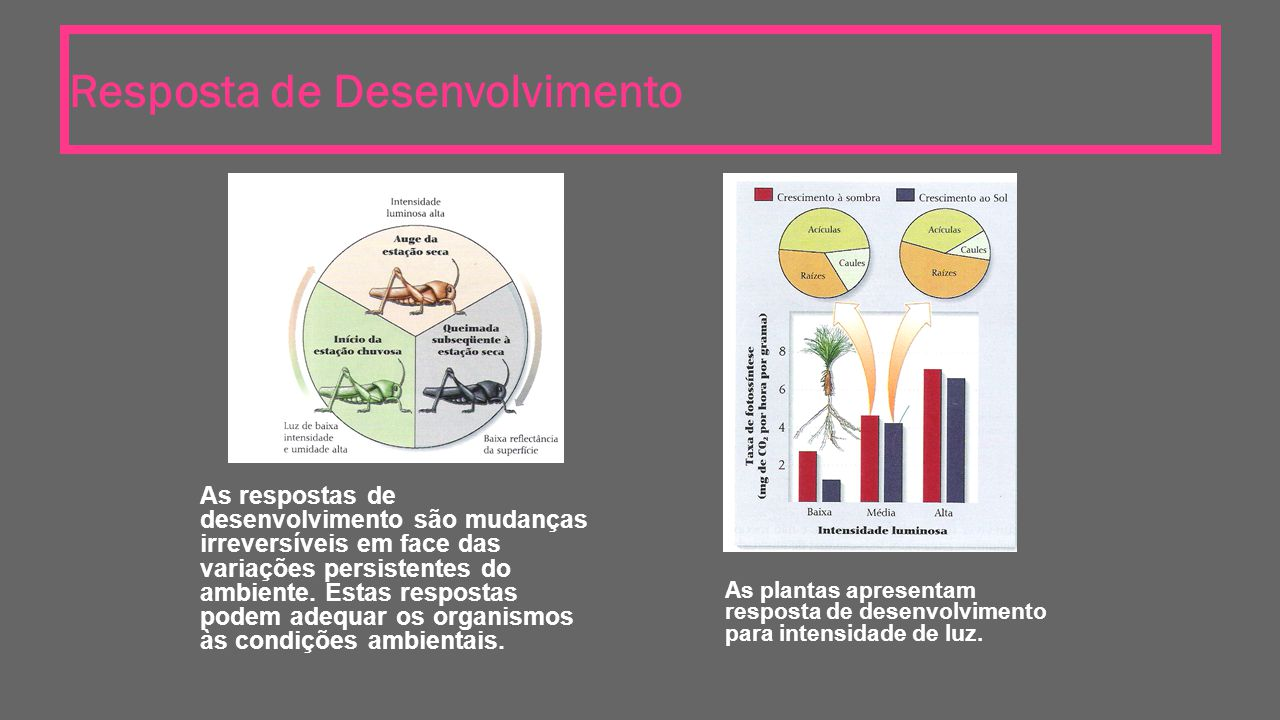 Resposta de Desenvolvimento As respostas de desenvolvimento são mudanças irreversíveis em face das variações persistentes do ambiente. Estas respostas