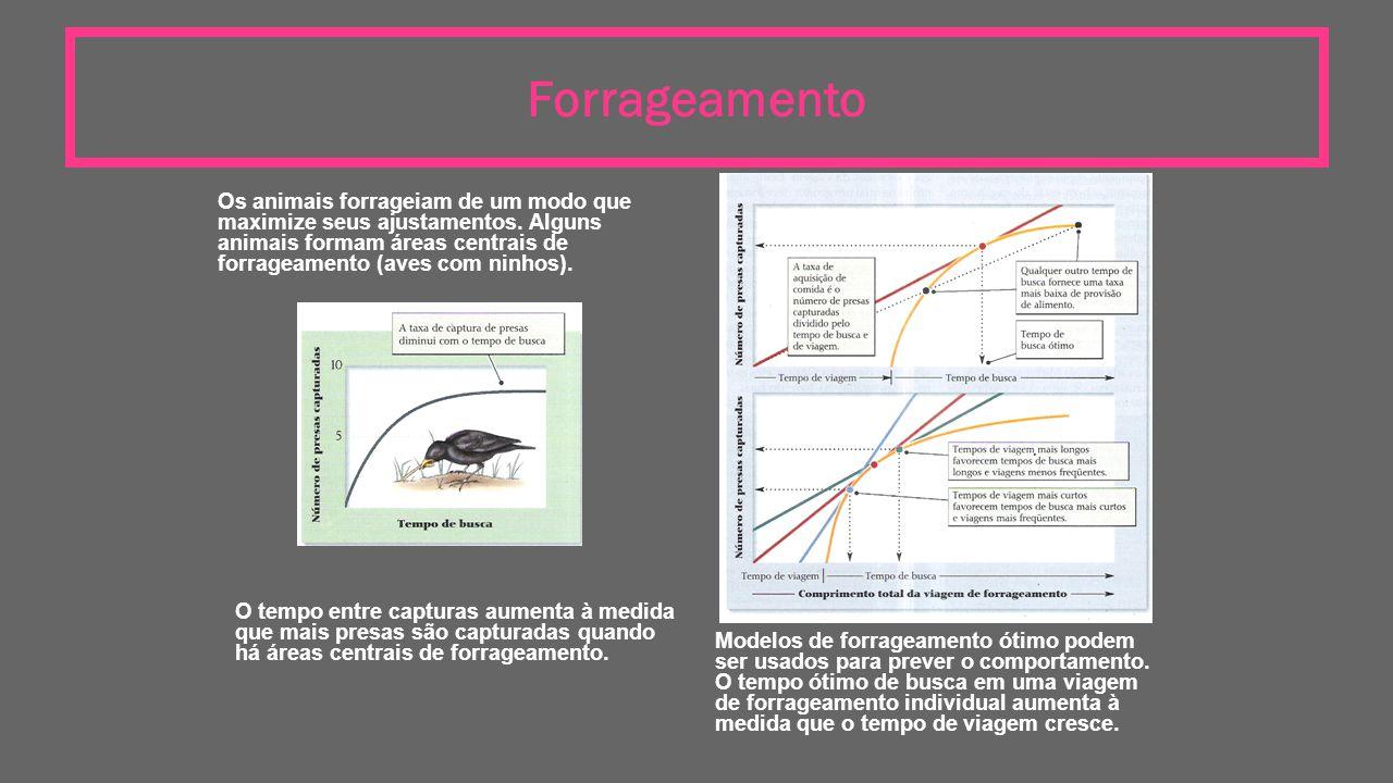 Forrageamento Os animais forrageiam de um modo que maximize seus ajustamentos. Alguns animais formam áreas centrais de forrageamento (aves com ninhos)