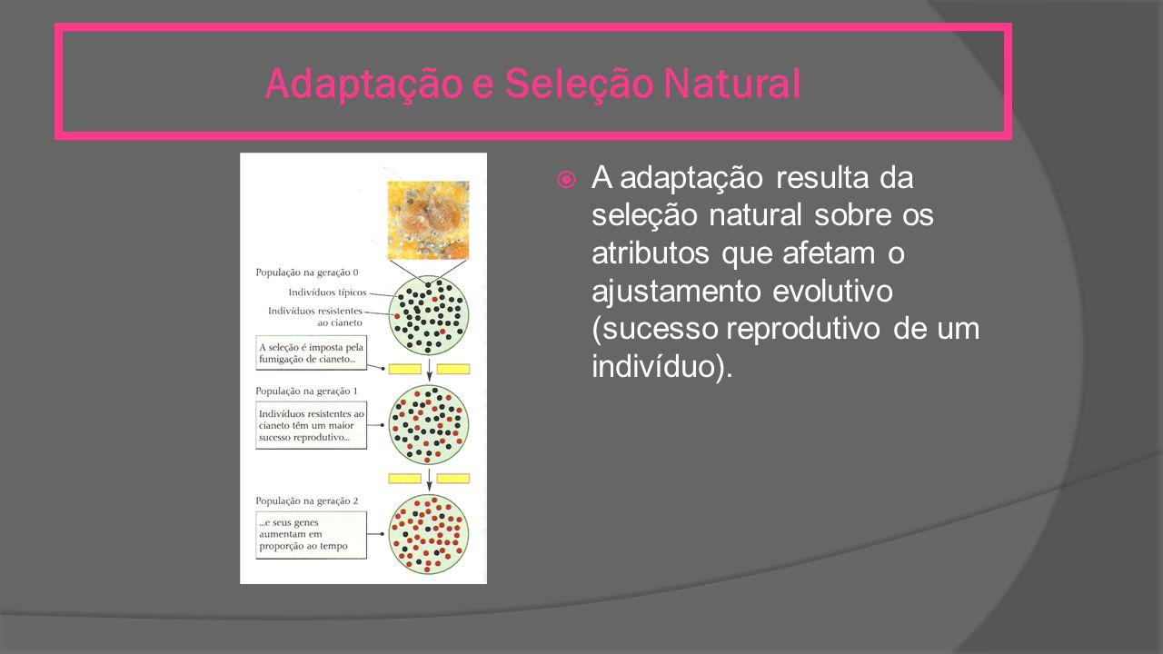 Adaptação e Seleção Natural  A adaptação resulta da seleção natural sobre os atributos que afetam o ajustamento evolutivo (sucesso reprodutivo de um indivíduo).