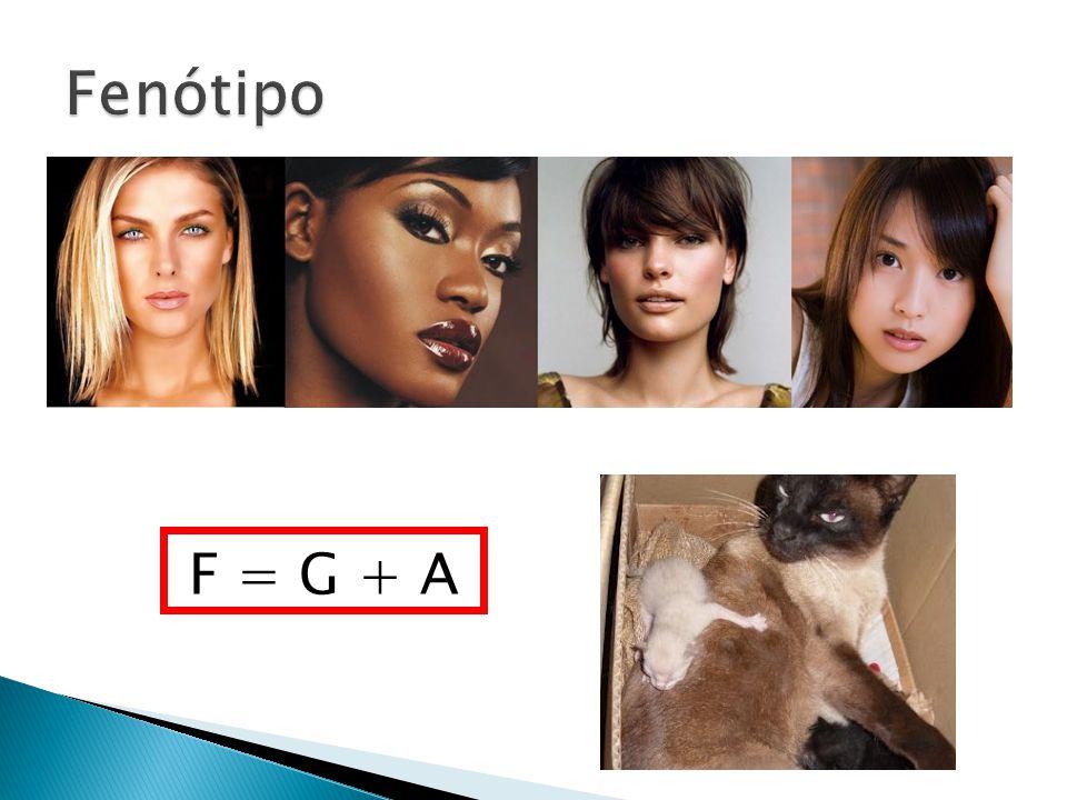 F = G + A