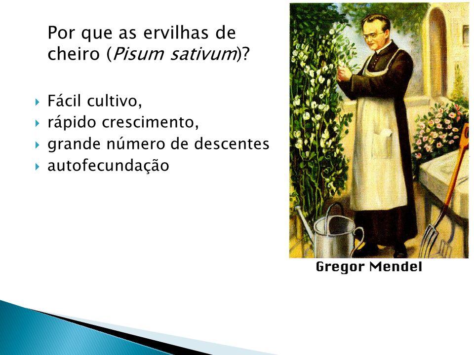 Por que as ervilhas de cheiro (Pisum sativum).