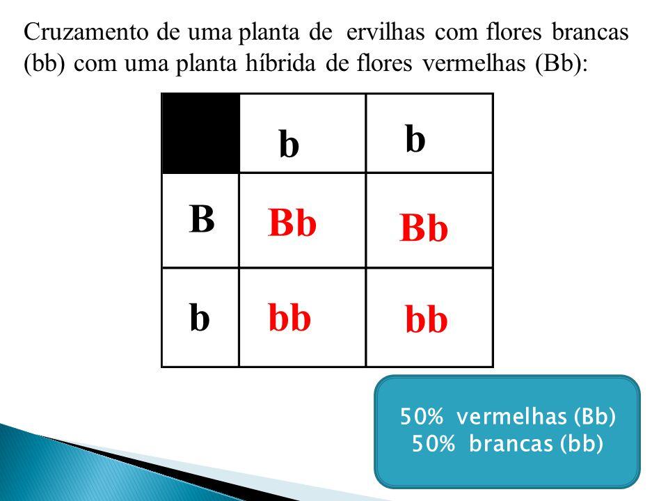 Cruzamento de uma planta de ervilhas com flores brancas (bb) com uma planta híbrida de flores vermelhas (Bb): b b B b Bb bb 50% vermelhas (Bb) 50% brancas (bb)