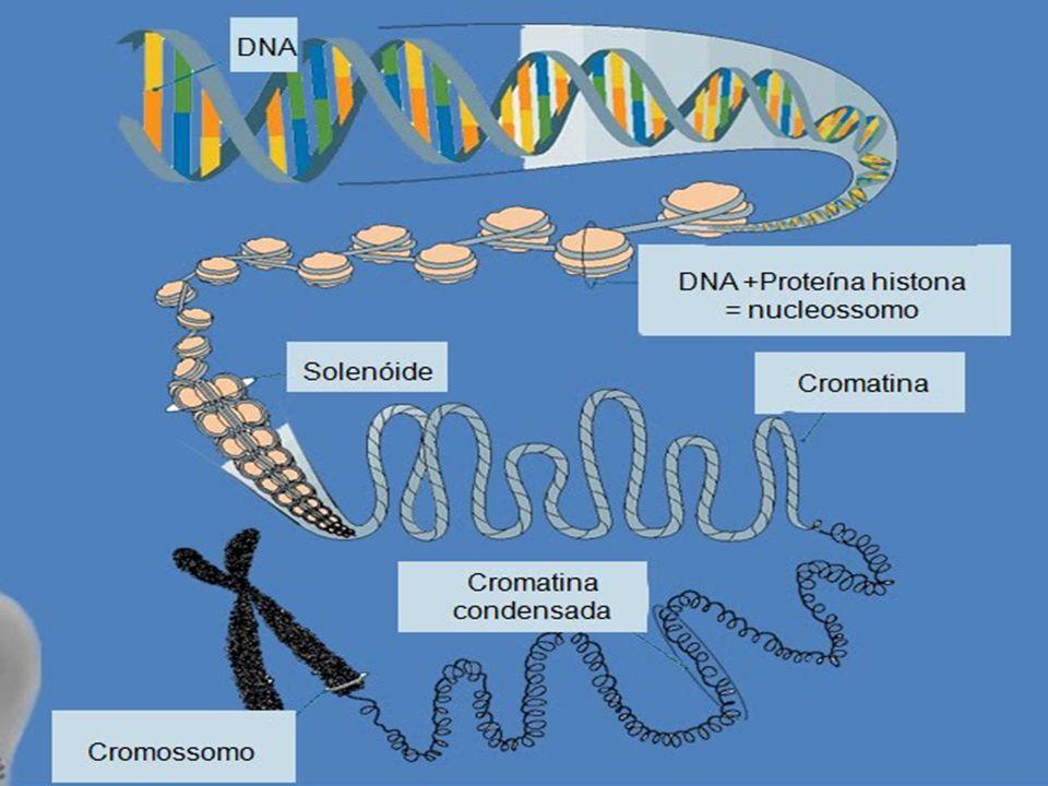 - Genética Clássica  unidade fundamental da hereditariedade.