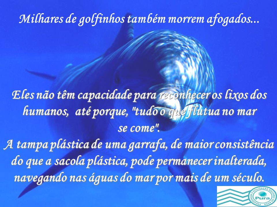 As tartarugas marinhas confundem-nas com as medusas e as comem, afogando-se na tentativa de engoli-las. Milhões de sacolas de nylon e plásticos de tod