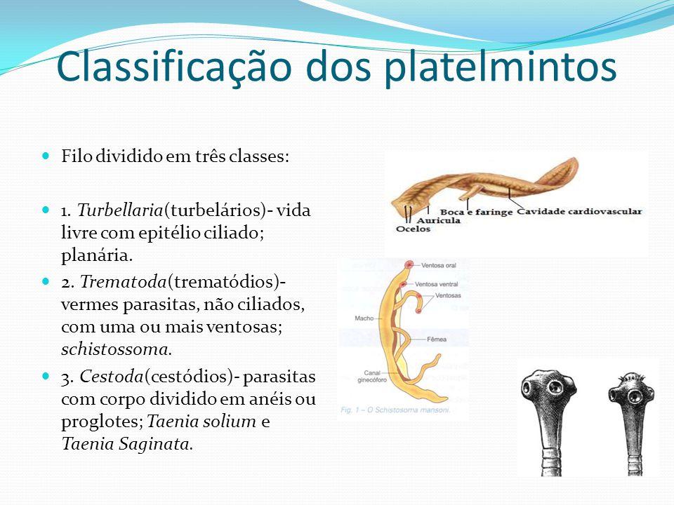 Classificação dos platelmintos  Filo dividido em três classes:  1. Turbellaria(turbelários)- vida livre com epitélio ciliado; planária.  2. Tremato