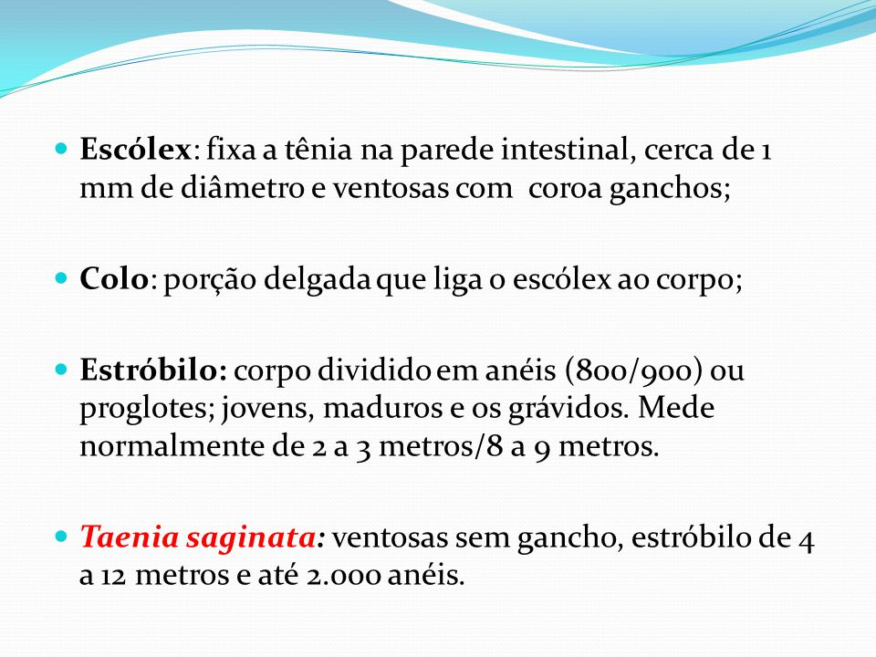  Escólex: fixa a tênia na parede intestinal, cerca de 1 mm de diâmetro e ventosas com coroa ganchos;  Colo: porção delgada que liga o escólex ao cor