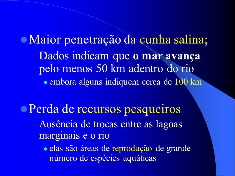  Maior penetração da cunha salina; – Dados indicam que o mar avança pelo menos 50 km adentro do rio  embora alguns indiquem cerca de 100 km  Perda