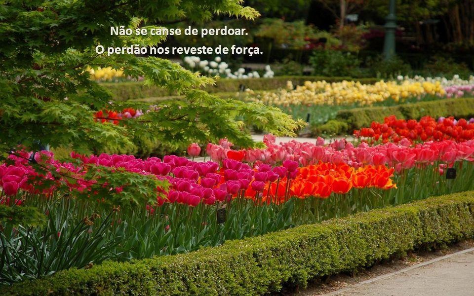 Não se canse de perdoar. O perdão nos reveste de força.