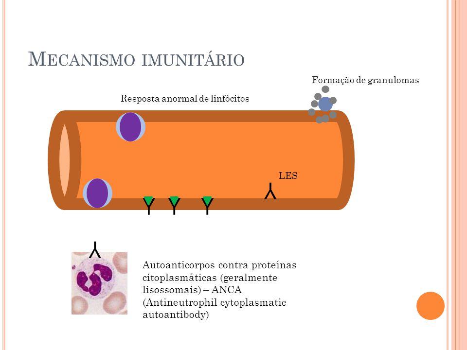M ECANISMO IMUNITÁRIO YYY Y Y Resposta anormal de linfócitos Formação de granulomas Autoanticorpos contra proteínas citoplasmáticas (geralmente lisoss