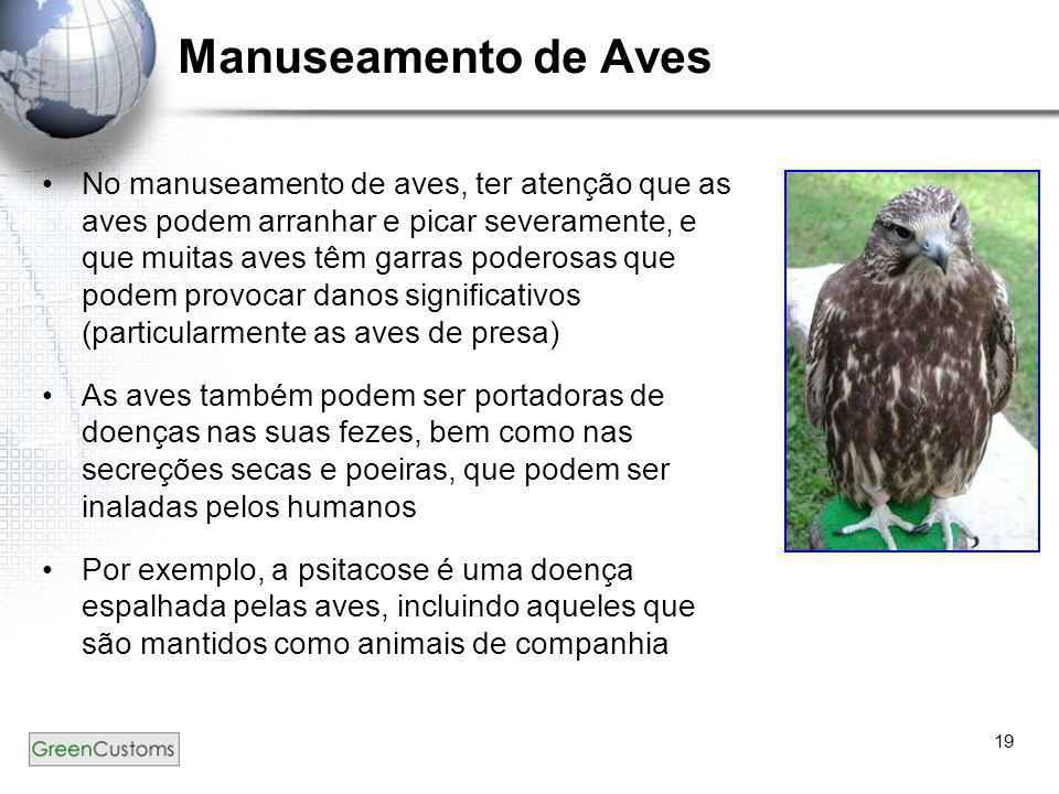 19 Manuseamento de Aves •No manuseamento de aves, ter atenção que as aves podem arranhar e picar severamente, e que muitas aves têm garras poderosas q