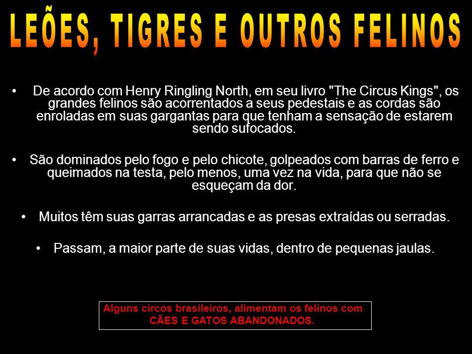 • De acordo com Henry Ringling North, em seu livro The Circus Kings , os grandes felinos são acorrentados a seus pedestais e as cordas são enroladas em suas gargantas para que tenham a sensação de estarem sendo sufocados.
