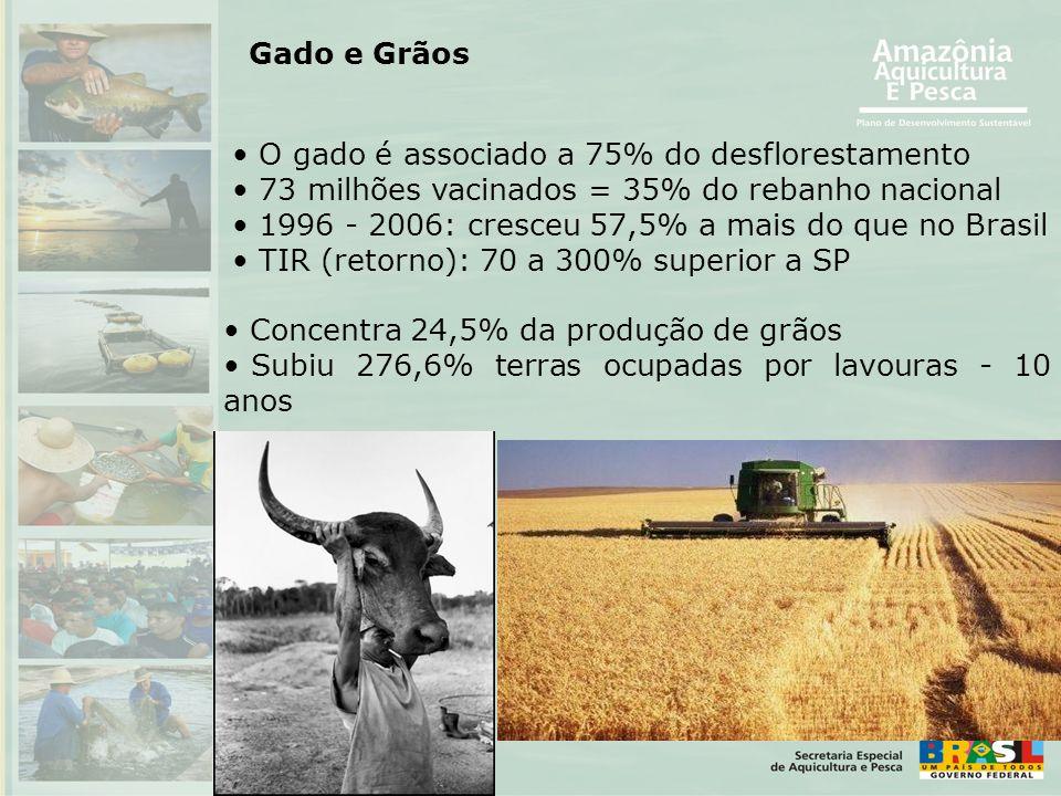 • Concentra 24,5% da produção de grãos • Subiu 276,6% terras ocupadas por lavouras - 10 anos • O gado é associado a 75% do desflorestamento • 73 milhõ