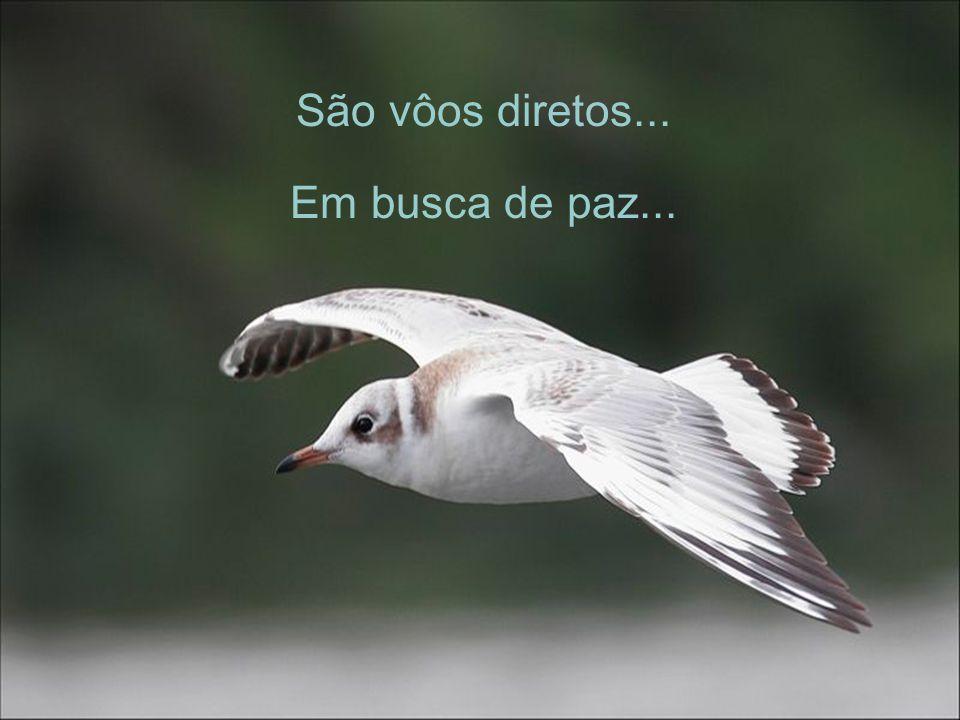 São vôos diretos... Em busca de paz...