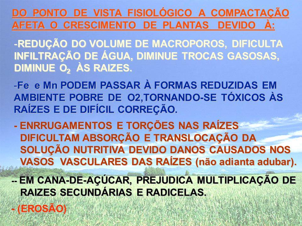 -- EM CANA-DE-AÇÚCAR, PREJUDICA MULTIPLICAÇÃO DE RAIZES SECUNDÁRIAS E RADICELAS.