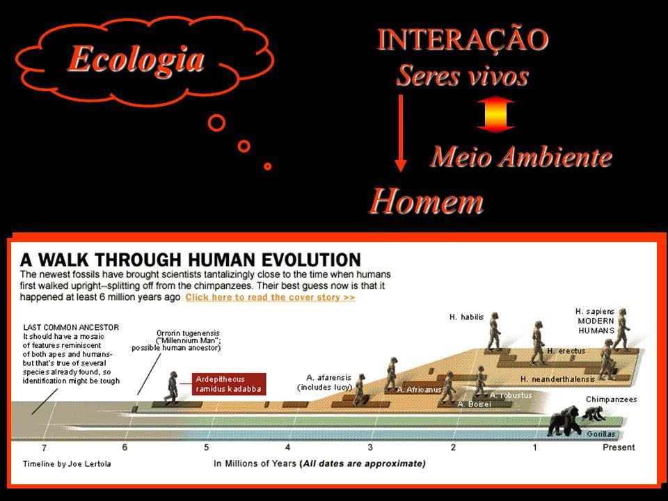 2000 Curso Básico de Educação Ambiental a Distancia DEA/ MMA UFSC/ LED/ LEA 2002 Lançado o Sistema Brasileiro de Informação sobre Educação Ambiental e Práticas Sustentáveis (SIBEA)