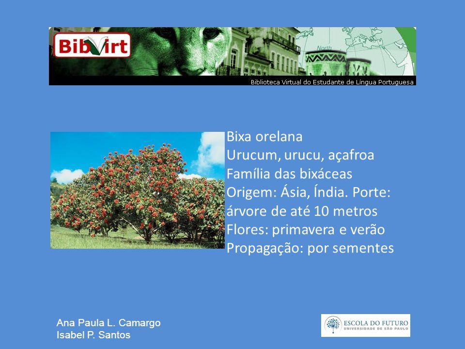 Ana Paula L. Camargo Isabel P.