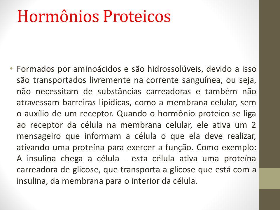 Hormônios Proteicos • Formados por aminoácidos e são hidrossolúveis, devido a isso são transportados livremente na corrente sanguínea, ou seja, não ne