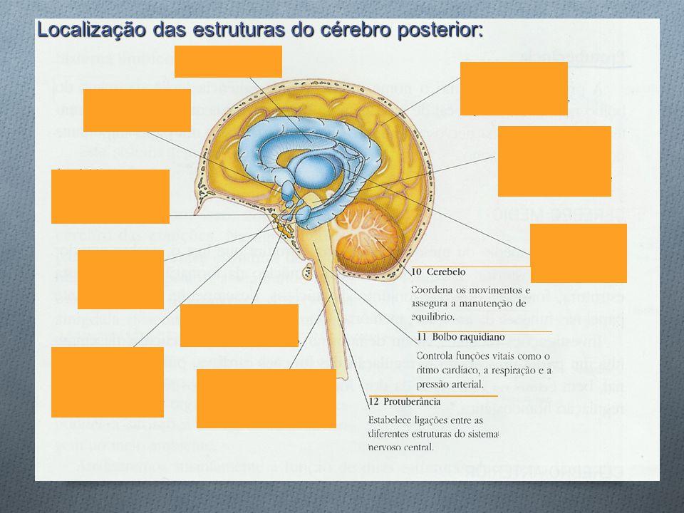 Localização das estruturas do cérebro posterior: