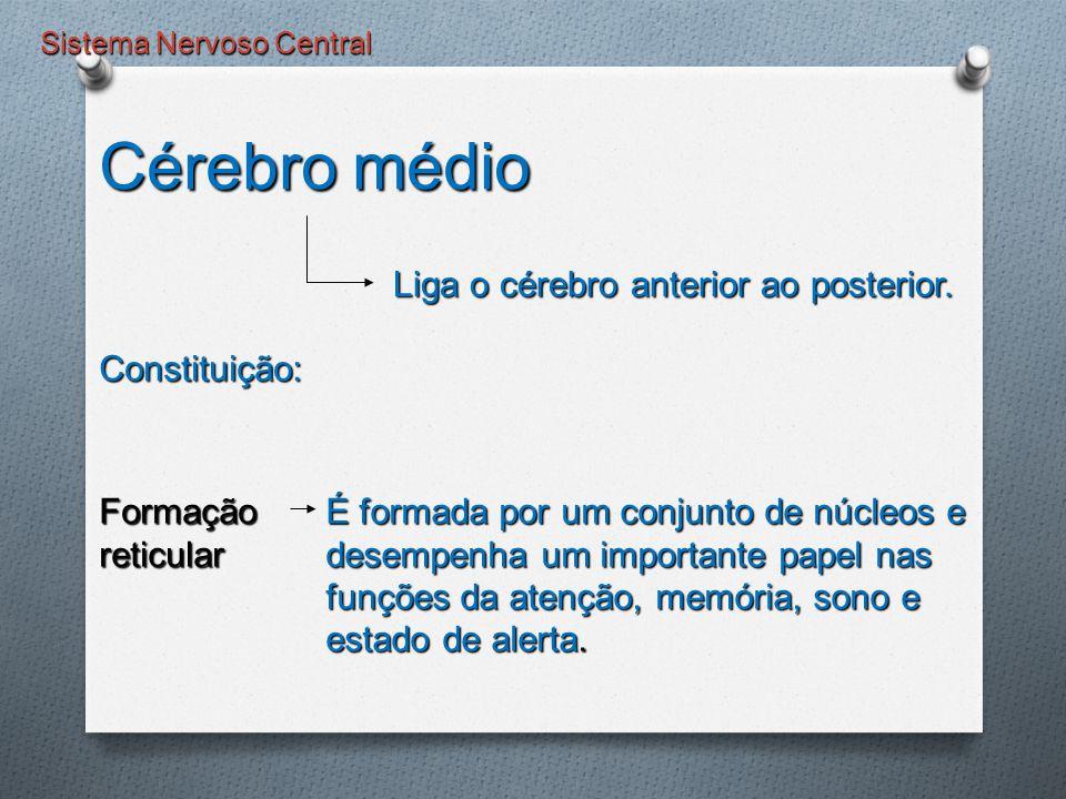 Sistema Nervoso Central É formada por um conjunto de núcleos e desempenha um importante papel nas funções da atenção, memória, sono e estado de alerta