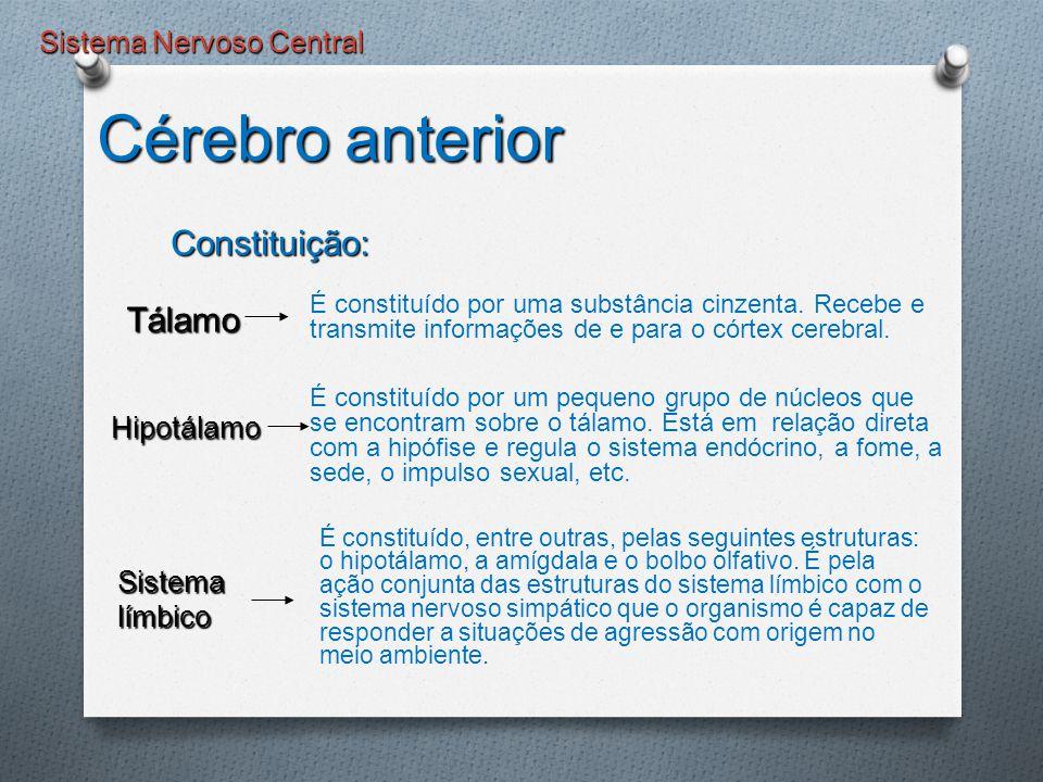 Sistema Nervoso Central É constituído por uma substância cinzenta. Recebe e transmite informações de e para o córtex cerebral. Tálamo Tálamo Hipotálam