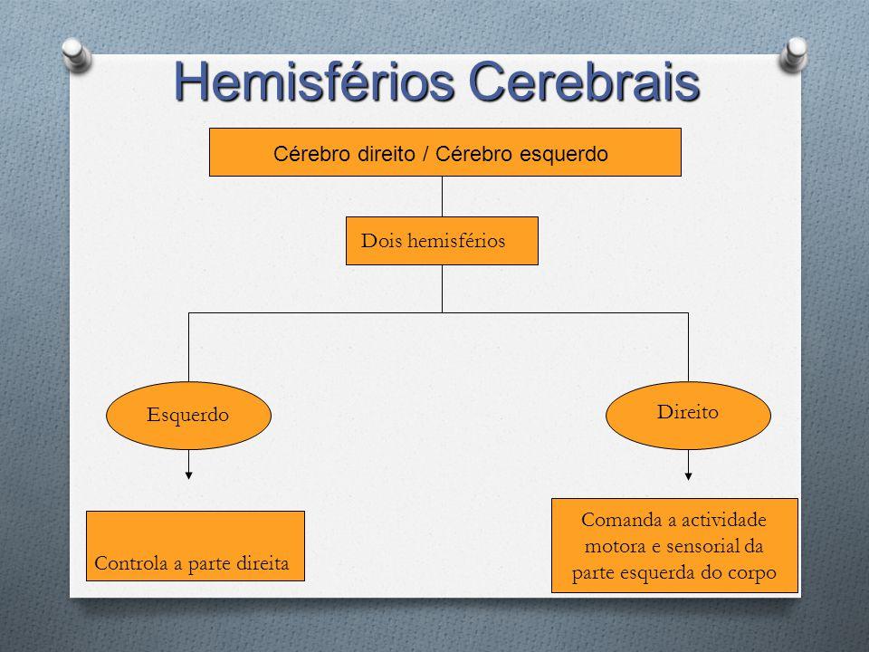 Cérebro direito / Cérebro esquerdo Dois hemisférios Esquerdo Direito Comanda a actividade motora e sensorial da parte esquerda do corpo Controla a par