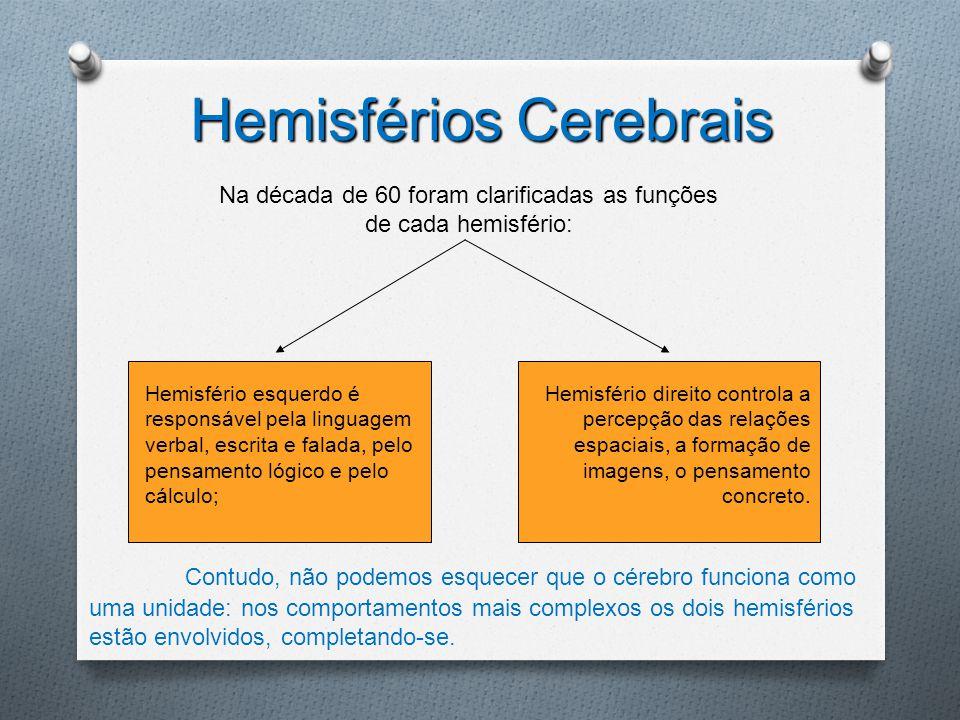 Hemisfério esquerdo é responsável pela linguagem verbal, escrita e falada, pelo pensamento lógico e pelo cálculo; Hemisfério direito controla a percep