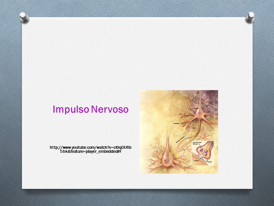 Impulso Nervoso http://www.youtube.com/watch?v=cI9qDU6b 5bk&feature=player_embedded#!