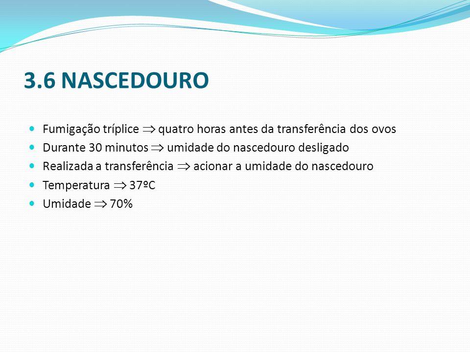 3.6 NASCEDOURO  Fumigação tríplice  quatro horas antes da transferência dos ovos  Durante 30 minutos  umidade do nascedouro desligado  Realizada a transferência  acionar a umidade do nascedouro  Temperatura  37ºC  Umidade  70%