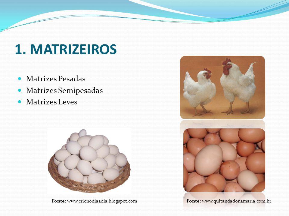 1.1 MATRIZES  Controle de peso  Uniformidade  Programa de vacinação  Programa de luz  Produção  Fertilidade  Descarte das aves improdutivas  Muda forçada Fonte: www.sogranjas.com.br